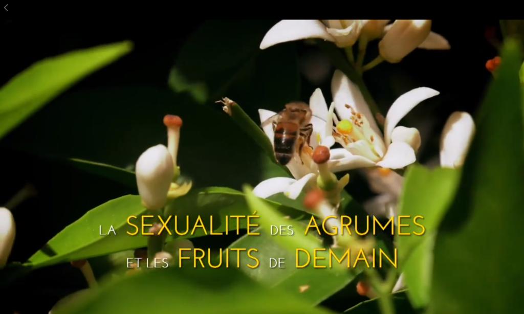 La sexualité des agrumes et les fruits de demain